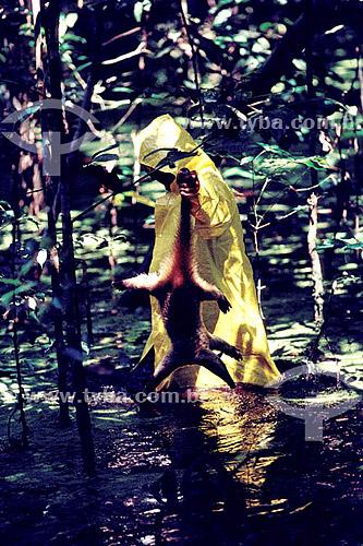 Ambiental - Homem com capa de chuva resgatando animais na inundação da construção da Hidrelétrica Balbina - AM - Brasil  - Presidente Figueiredo - Amazonas - Brasil