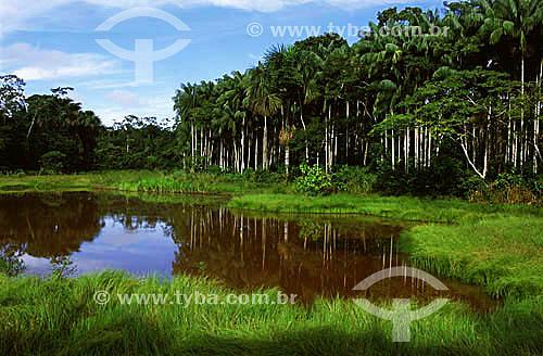 Parque Zoobotânico da UFAC - Universidade Federal do Acre, em Rio Branco/AC(maio de 2001)  - Rio Branco - Acre - Brasil