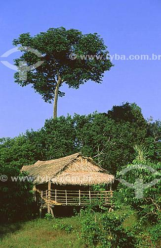 Castanheira e habitação tradicional de palha - Amazônia - AM - julho de 2001 - Brasil  - Amazonas - Brasil