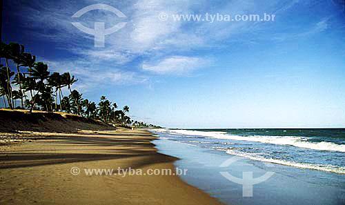 Praia de Itapoa com coqueiros - Salvador - Bahia - Brasil  - Salvador - Bahia - Brasil