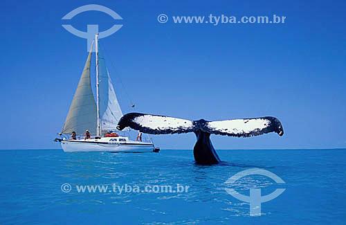 Cauda de Baleia Jubarte ao lado de barco à vela - Arquipélago de Abrolhos  - Costa das Baleias - litoral sul da Bahia - Brasil / Data: 2007  O Parque Nacional Marinho de Abrolhos foi criado em 6 de abril de 1983.