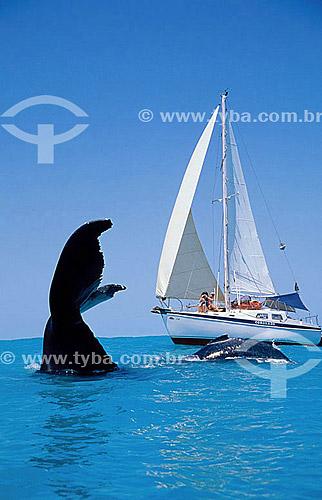 Cauda de Baleia Jubarte ao lado de barco à vela - Abrolhos  - Costa das Baleias - litoral sul da Bahia - Brasil / Data: 2007  O Parque Nacional Marinho de Abrolhos foi criado em 6 de abril de 1983.