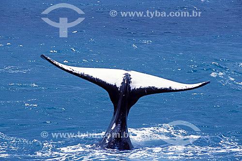 Cauda de Baleia Jubarte - Abrolhos  - Costa das Baleias - litoral sul da Bahia  - Caravelas - Bahia - Brasil