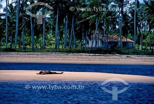 Homem deitado em praia com coqueiros e casa ao fundo - Caraíva - Bahia - Brasil  - Porto Seguro - Bahia - Brasil