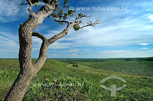 Árvore em primeiro plano - Cerrado, Campo úmido e Mata Ciliar - Parque Nacional das Emas - Goiás - Brasil / Data: 2005