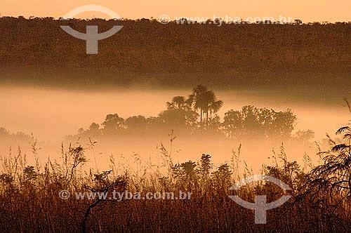 Amanhecer na Baixada do Rio Formoso - Parque Nacional das Emas - Goiás - Brasil / Data: 2005