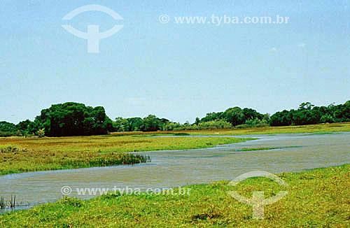 Campos na Ilha de Marajó - Pará - Brasil  - Belém - Pará - Brasil