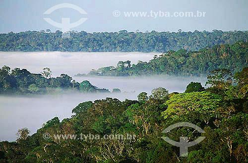 Assunto: Floresta amazônica de terra firme - Serra dos Carajás - Amazônia / Local: Pará (PA) - Brasil / Data: 2008
