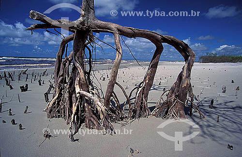 Mangue - Ilha de Superagüi - Paraná - Brasil / Data: 12/1997