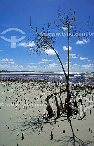 Praia deserta - Mangue - Ilha de Superagüi - Paraná - Brazil / Data: 12/1997