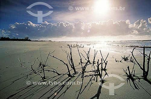 Praia deserta - Mangue - Ilha de Superagüi - Paraná - Brasil / Data: 12/1997