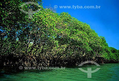 Raízes aéreas de manguezal na entrada da restinga de Marambaia, que pela rica diversidade é local de preocupação e pesquisa de ambientalistas - Barra de Guaratiba - Rio de Janeiro - RJ - Brasil / Data: 1996