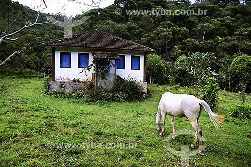 Cavalo pastando em frente a pequena casa em Visconde de Mauá - RJ - Brasil - Data: Fevereiro 2008