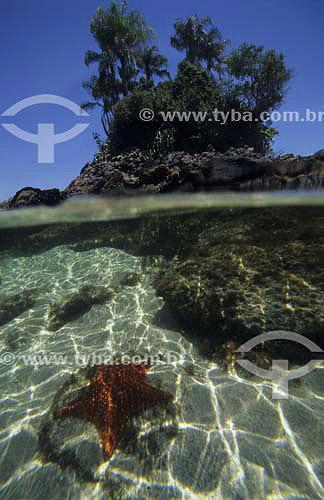 Estrela-do-mar a frente com ilha arborizada ao fundo no mar - Lagoa Azul - Ilha Grande - Angra dos Reis - Rio de Janeiro - Brasil  - Angra dos Reis - Rio de Janeiro - Brasil