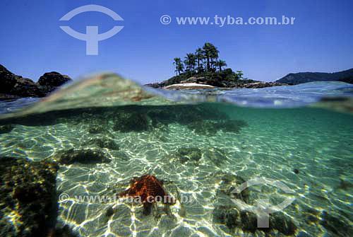 Estrela-do-mar a frente com ilha arborizada ao fundo no mar - Lagoa Azul - Ilha Grande - Angra dos Reis - Rio de Janeiro - Brasil / Data: 2008