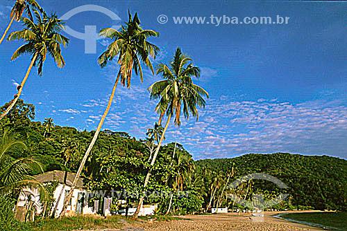 Praia das Palmas - Ilha Grande - RJ - Brasil  - Angra dos Reis - Rio de Janeiro - Brasil