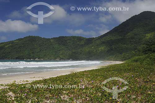 Praia do Cachadaço - Trindade - Paraty  - Costa Verde - RJ - Brasil - Abril 2006  - Paraty - Rio de Janeiro - Brasil