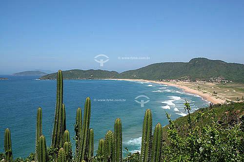 Praia de Tucuns com catus em primeiro plano -  Búzios - Região dos Lagos - Litoral norte do Rio de Janeiro - Brasil - Outubro 2005  - Armação dos Búzios - Rio de Janeiro - Brasil