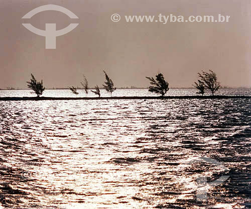 Entardecer na Restinga - Lagoa de Araruama - Arraial do Cabo - RJ - Brasil  - Cabo Frio - Rio de Janeiro - Brasil