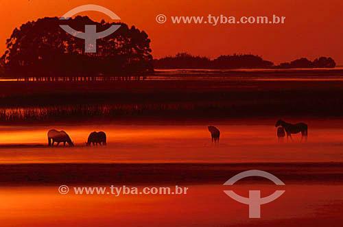 Estação Ecológica do Taim - Cavalos pastando envoltos em neblina - RS - Brasil  - Rio Grande - Rio Grande do Sul - Brasil