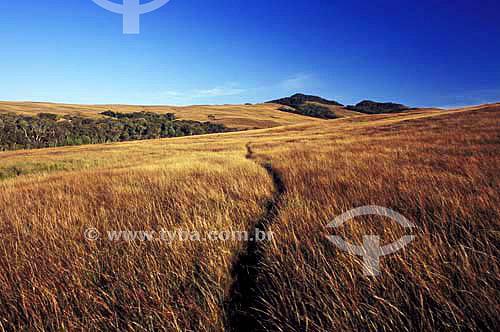 Campos de Altitude na Serra da Boa Vista - Rancho Queimado - Santa Catarina - Brasil - Maio de 2005  - Rancho Queimado - Santa Catarina - Brasil