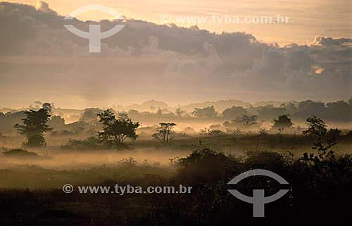 Brumas ao amanhecer na Zona da Mata - Sergipe - Brasil  - Sergipe - Brasil