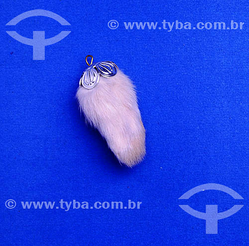 Pé-de-coelho, amuleto de boa sorte segundo a crendice popular