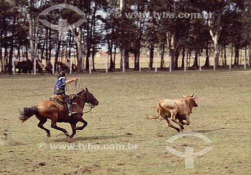 Vaquejada - Vaqueiro à cavalo e novilho na prova de laço comprido