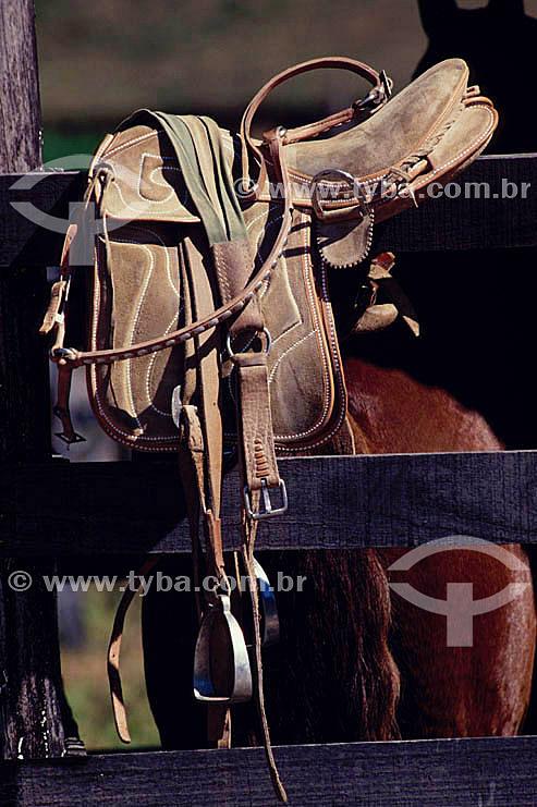 Equipamento de montaria - cela e cavalo
