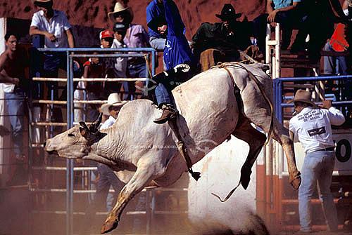 Vaqueiros e touro na Festa do Peão Boiadeiro - Barretos - SP - Brasil - 1991.  - Barretos - São Paulo - Brasil