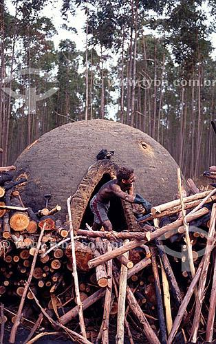 Carvoeiro e lenha para uso em fornos de carvão, um dos fatores de destruição das matas no Brasil - Vale do Jequitinhonha - MG - Brasil / 2007  - Minas Gerais - Brasil