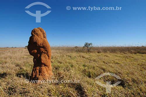 Cerrado - Campos limpos do Parque Nacional das Emas  - GO - Brasil.   O Parque é Patrimônio Mundial pela UNESCO desde 16-12-2001 / Data: 2005