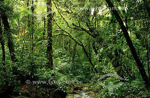 Floresta densa com grande diversidade - Mata Atlântica  - Parque Estadual de Intervales - SP - BrasilData: Janeiro 2009