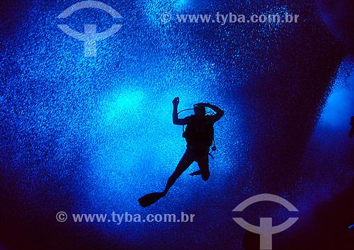 Cardúme de sardinhas e mergulhador - Fernando de Noronha - PE - Brasil  - Fernando de Noronha - Pernambuco - Brasil