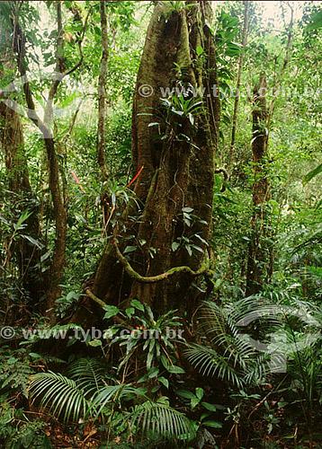 Árvore com epífitas - Serra do Mar  - PR - Brasil / Data: 1996  O trecho da Mata Atlântica que inicia-se na Serra da Juréia, em Iguape/SP e vai até à Ilha do Mel, em Paranaguá/PR é Patrimônio Mundial Natural da UNESCO desde 1999.