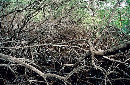 Manguezal na Barra do Rio Caí - litoral sul da Bahia - Brasil / Data: 2010  A área denominada Costa do Descobrimento (Reserva da Mata Atlântica) é Patrimônio Mundial pela UNESCO desde 01-12-1999 e nela estão localizadas 23 áreas de proteção ambiental na Bahia (incluindo Porto Seguro).