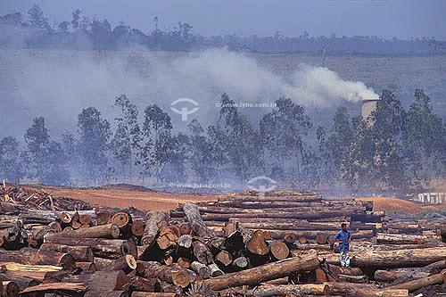Desmatamento - Toras de Mogno em serraria em Paragominas - Pará - BrasilData: outubro de 2008