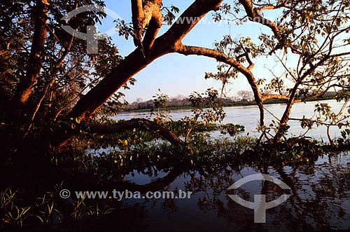 Taiama Reserva ecológica - Rio Paraguai - Mato Grosso - Brasil  - Mato Grosso - Brasil
