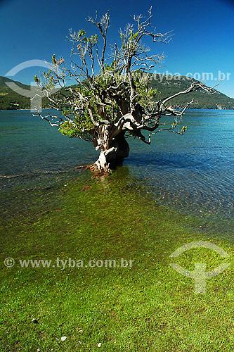 Árvore no Lago lacar - san martin de los andes - patagonia -  argentina / Data: 2007