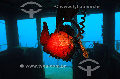 Naufrágio no Mar do Caribe - Ilhas de Utila e Roatan - Honduras (Bay Islands) - apontadas como os lugares mais baratos para aprender a mergulhar de todo Caribe - junho/2004.