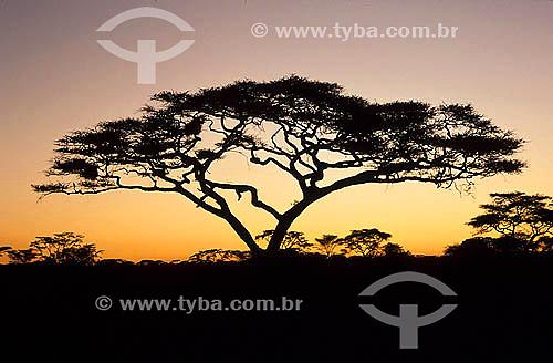 Amanhecer - Parque Nacional Serengueti - Tanzânia