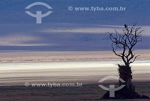 Pássaros em galho seco de árvore - Cratera de Ngorongoro - Tanzânia - África