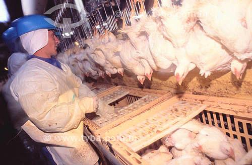 Agro-Industry (Agro Industry) - Avicultura / frango : Trabalhador em frigorífico  - Sadia - Concórdia - SC - Brasil - data: 2002  - Concórdia - Santa Catarina - Brasil