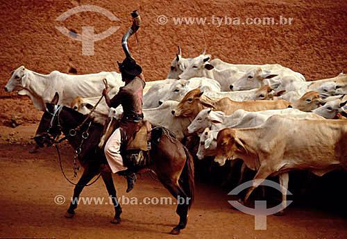 Assunto: Agropecuária, vaqueiro a cavalo com berrante manejando o gado / Local: Pantanal / Data: Década de 80