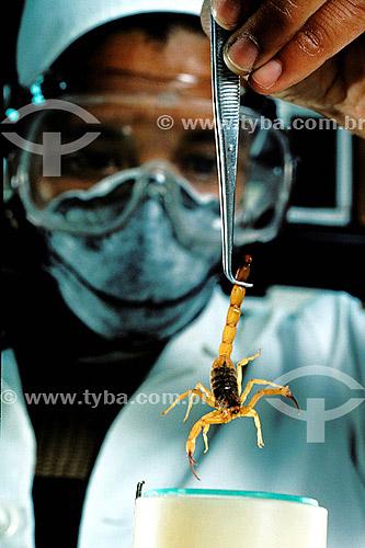 Produção de vacina utilizando escorpiões - Instituto Butantan - SP - BrasilData: 08-12-1989