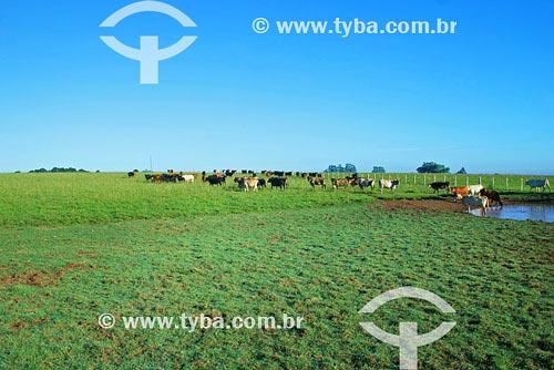 Assunto: Criação de gado - PecuáriaLocal: Santo Ângelo - RSData Março de 2008