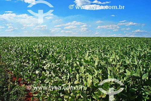 Assunto: Agricultura - Plantação de SojaLocal: Santo Ângelo - RSData: Março de 2008