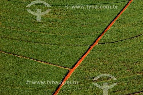 Assunto: Plantação de cana-de-açucarLocal: Triangulo Mineira - MGData: Março de 2008