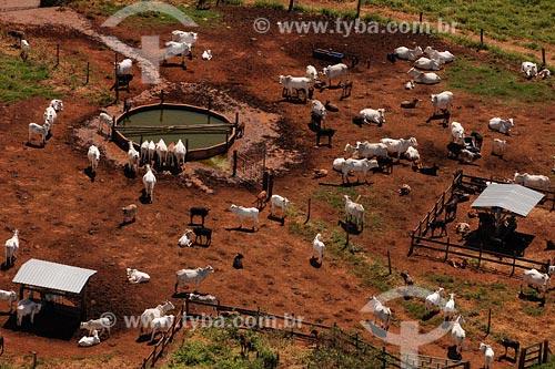 Assunto: Fazenda de gado da raça NeloreLocal: Triangulo Mineiro - MGData: Março de 2008