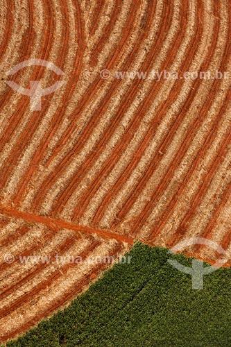 Assunto: Plantação de cana-de-açucarLocal: Triangulo Mineiro - MGData: Março de 2008